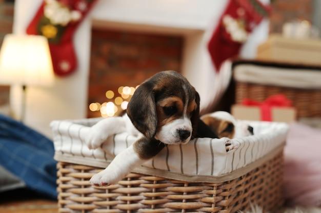 かごの中の犬 無料写真