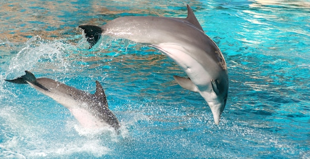 Dolphin jumping Free Photo