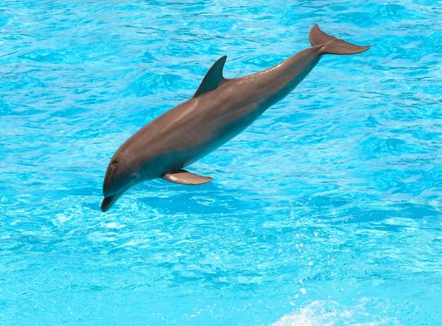 Dolphin Premium Photo