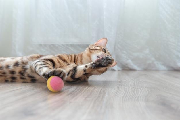 部屋の床にいる飼い猫が足を舐めている Premium写真