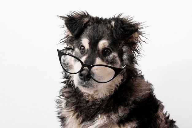Domestic dog with glasses Free Photo