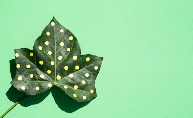Dotty leaf minimal nature still life concept on copy space background Free Photo