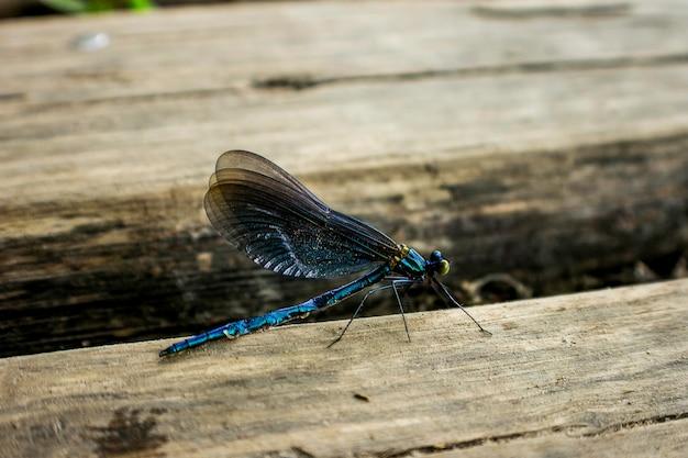 Dragon fly in plitvice, croatia. Premium Photo
