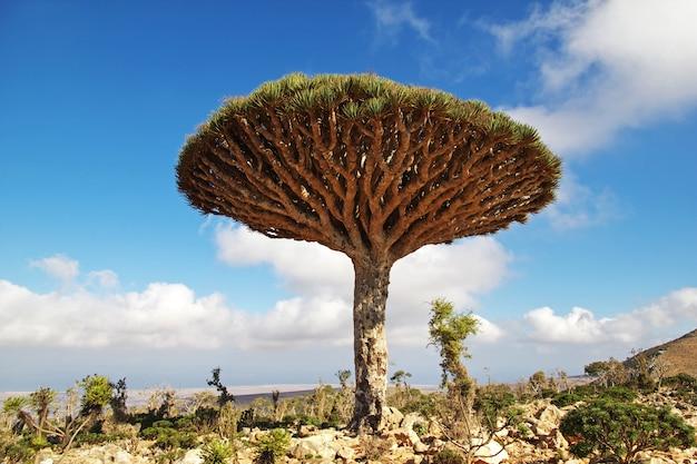 السياحة في جزيرة سقطري اليمنية