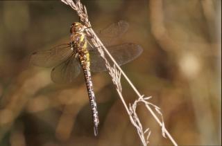 Dragonfly, plants, closeup Free Photo