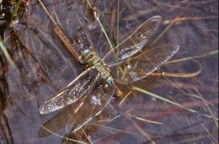 Dragonfly, plants Free Photo