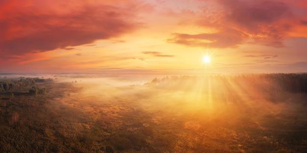 해돋이에 숲에서 극적인 안개 아침 프리미엄 사진