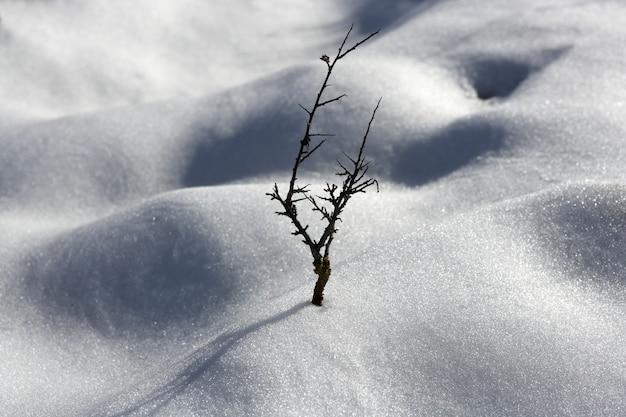 ドライブランチ孤独な木メタファー雪冬砂丘砂漠 Premium写真