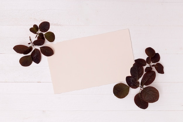 Dried brown leaves with mock-up space Free Photo