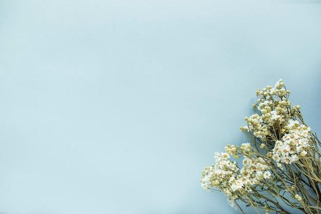 Сушеные полевые цветы ромашки на синем фоне. вид сверху, текстовое пространство Premium Фотографии