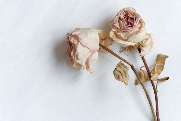 Dried faded roses on white pinted paper Premium Photo
