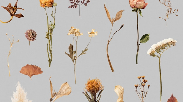 말린 꽃과 잎 무늬 무료 사진