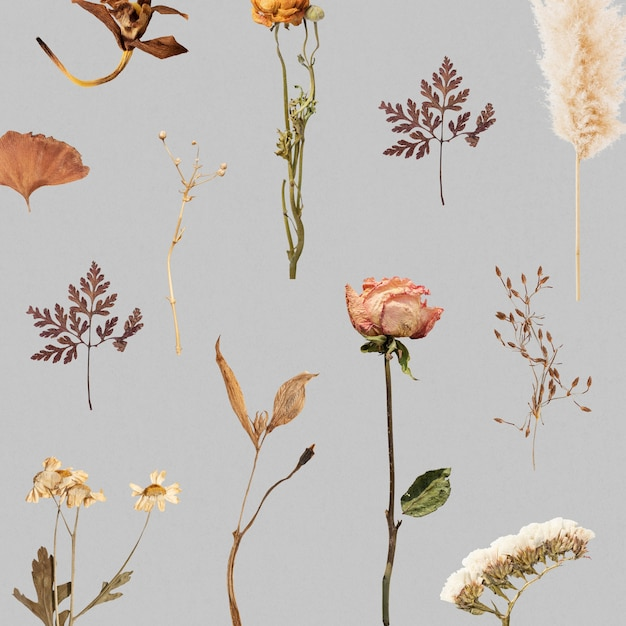 Dried flower and leaf patterned Free Photo
