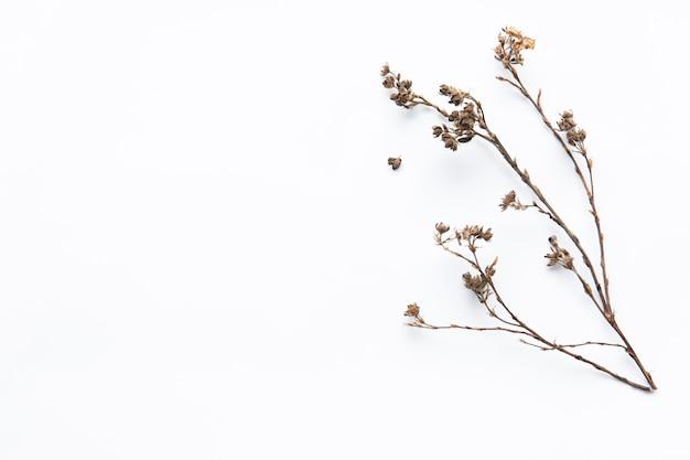 Dried flower twig Premium Photo