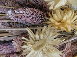 Dried flowers, flowers Free Photo