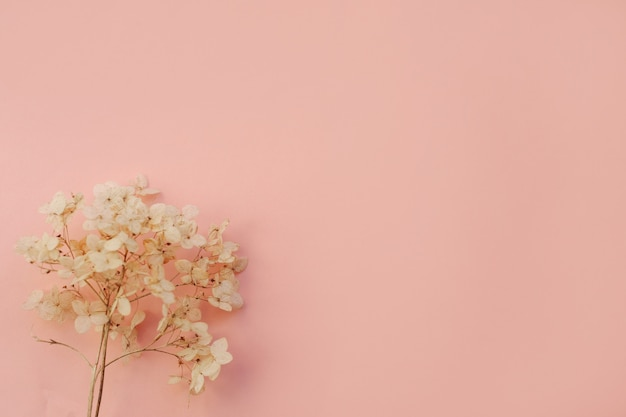 Dried flowers hydrangea on light blue background. copy space Premium Photo