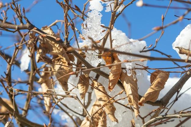 乾燥した葉とその上に雪 無料写真