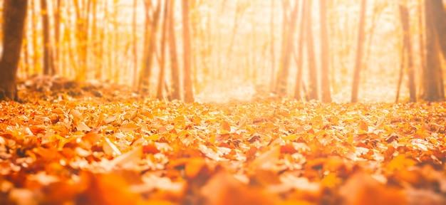 秋の森の乾燥葉 Premium写真