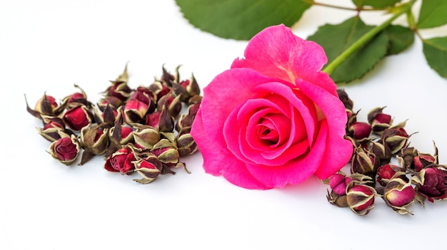 Dried pink rose on a white background. Premium Photo
