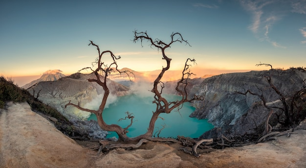 Dried tree on active volcano crater with turquoise lake at dawn Premium Photo