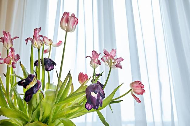 明るい日光の下で乾燥チューリップの花のクローズアップ。白ピンクのチューリップの花びらの花びら。花瓶の春の花をしおれます。枯れの概念色あせ花の美しさ Premium写真