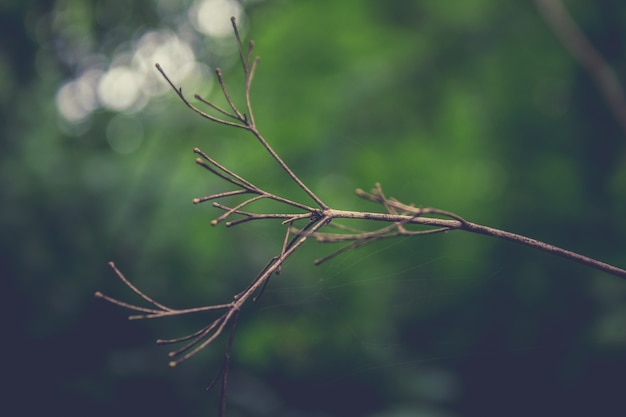 Dried twig with greenery in the background Free Photo