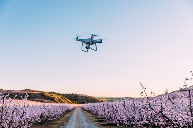 Dron flying over field of flowers Premium Photo