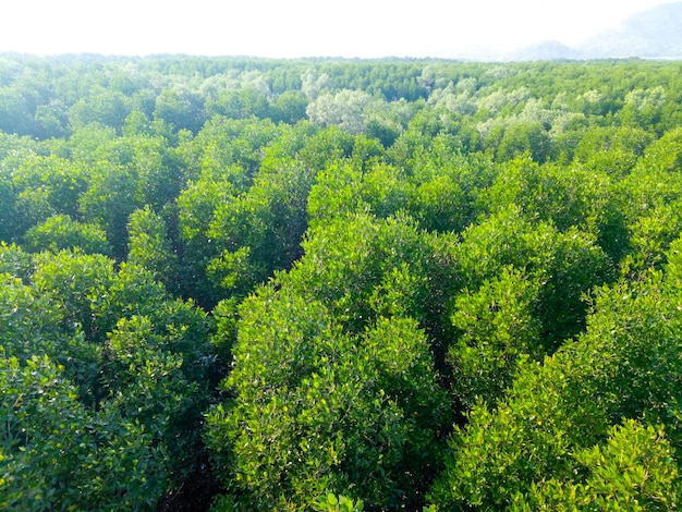 Drone flying over the wonderful forest. bird's eye view Premium Photo