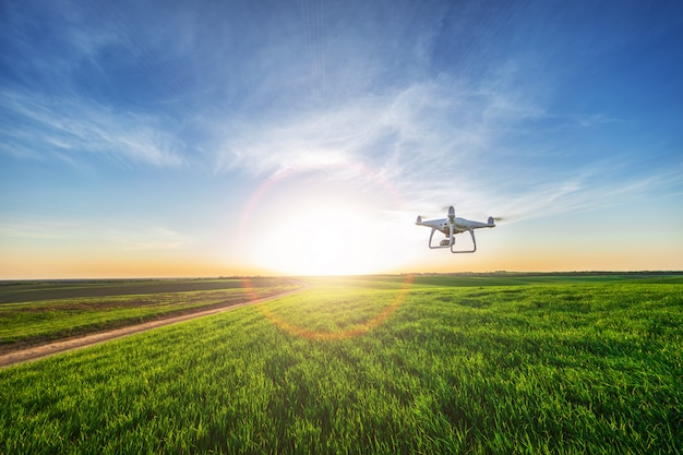 Drone quad copter on green corn field Premium Photo