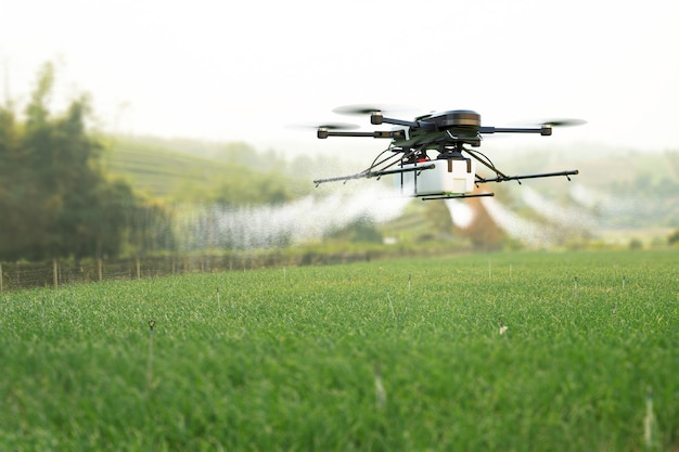 Drone spraying pesticide on wheat field Premium Photo