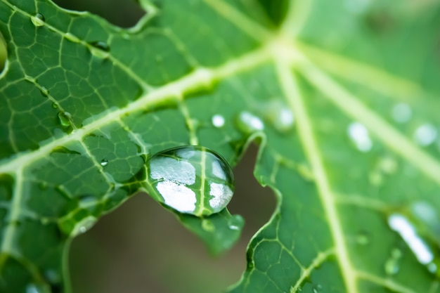 Drop on green leaf Premium Photo