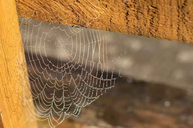 Капля конденсата на паутине Premium Фотографии
