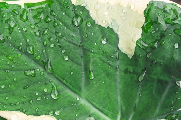 Drop water on tropical leaf Premium Photo