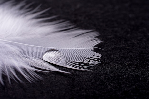 Drop of water on a white feather on black Premium Photo