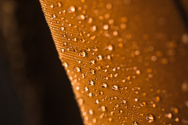 Droplets of water on brown feather textured background Free Photo