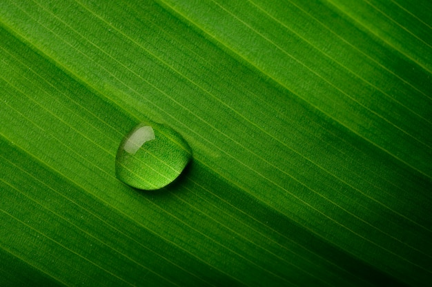 Drops of water falling on banana leaves Free Photo