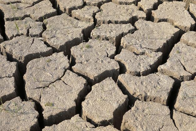 干ばつ。乾燥した土壌、地面は亀裂のテクスチャで覆われています。クローズアップ、トップビュー。 Premium写真