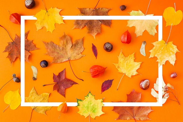 Dry autumn leaves as a frame template Premium Photo