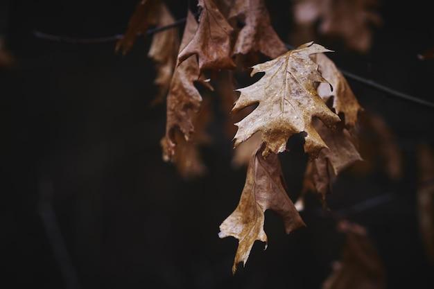 Сухие осенние листья фон Бесплатные Фотографии