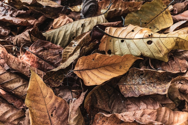 Dry autumn leaves falling down and pile up on floor Premium Photo