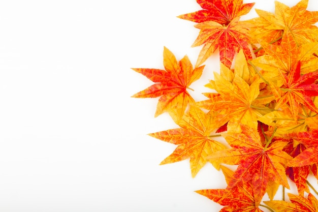 Dry autumn leaves on a white background Free Photo