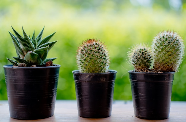 Dry cactus with the nature and great sun falre Premium Photo