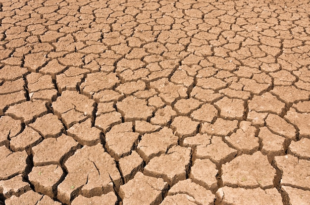Dry cracked soil. Premium Photo