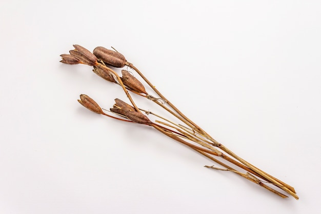 Dry decorative grass isolated on a white background. great element for a bouquet in floristry. ornamental plant for attractive flower arrangements Premium Photo