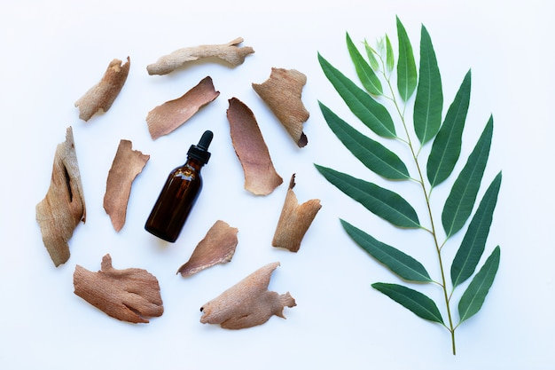 Dry eucalyptus bark with essential oil and  branch with leaves Premium Photo