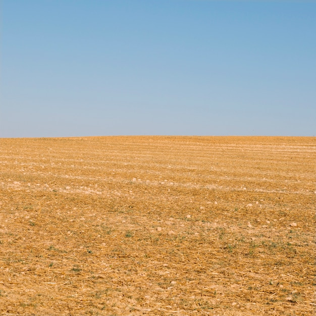 Dry field and blue sky Free Photo