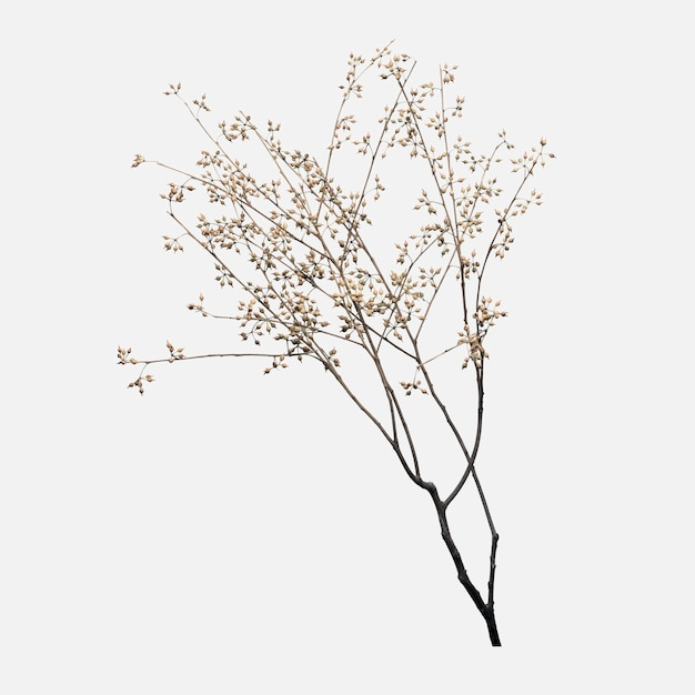 Dry flower branch on off white Free Photo