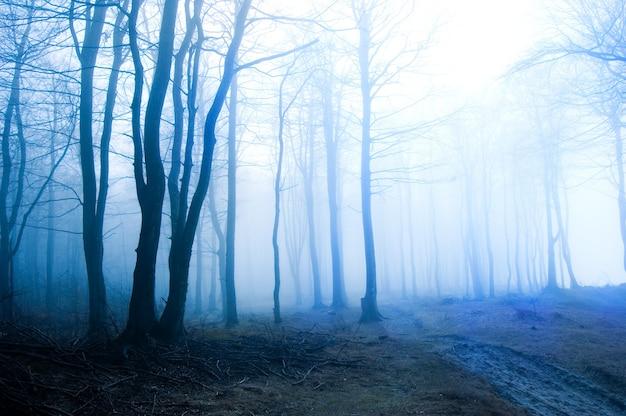 霧とドライ森 無料写真