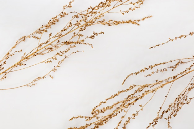Dry grass golden colored on light background for wedding cards, valentines day or screensaver. minimal nature . horizontal format image. Premium Photo
