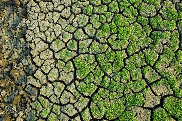 Dry green grass Premium Photo